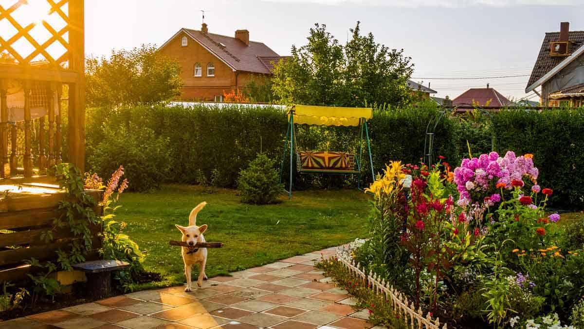 vakantiehuis met sauna en hond